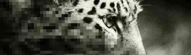 Mozilla crea un proyecto para reducir el peso de las imágenes JPEG